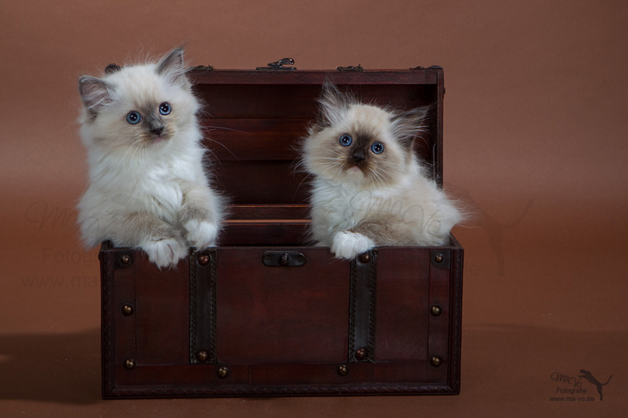 Photograph cute luggage by Marion Vollborn on 500px