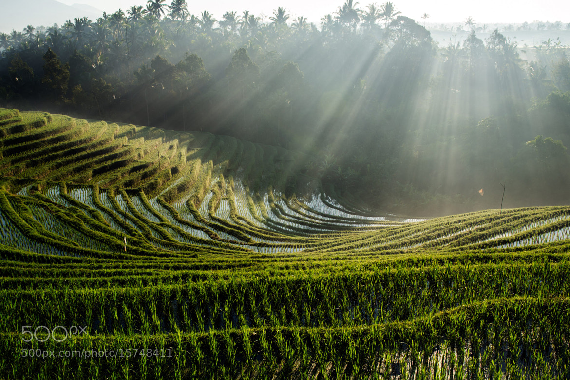 Photograph Terrace Rice Field BALI by James Khoo on 500px