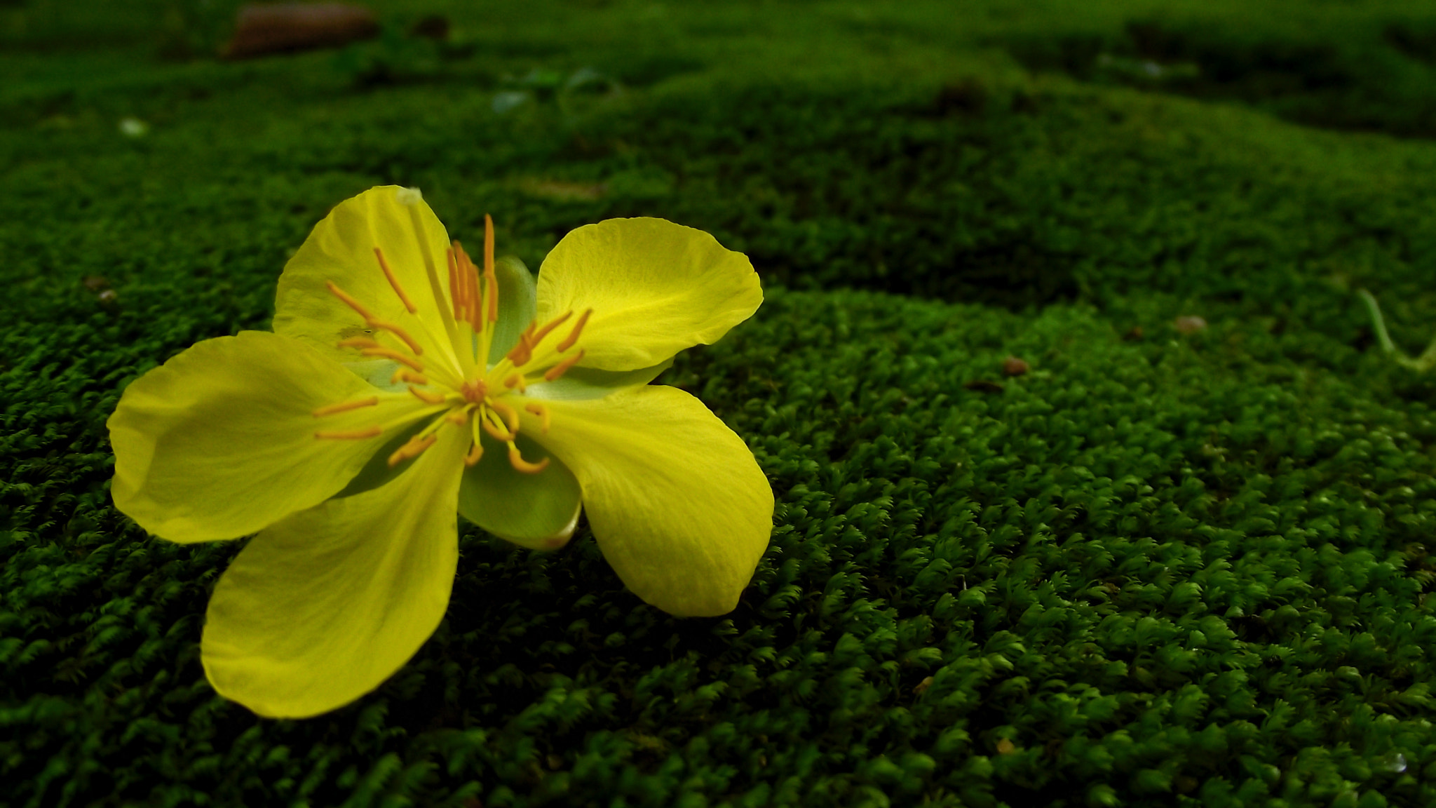 Photograph Untitled by Abhilash S on 500px
