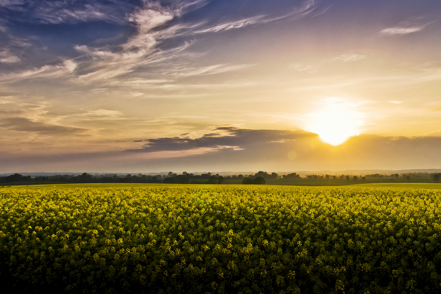 Photograph Stockelsdorf (Schleswig-Holstein), Germany - Sunset over Field of Rapeseed by Lars C. on 500px