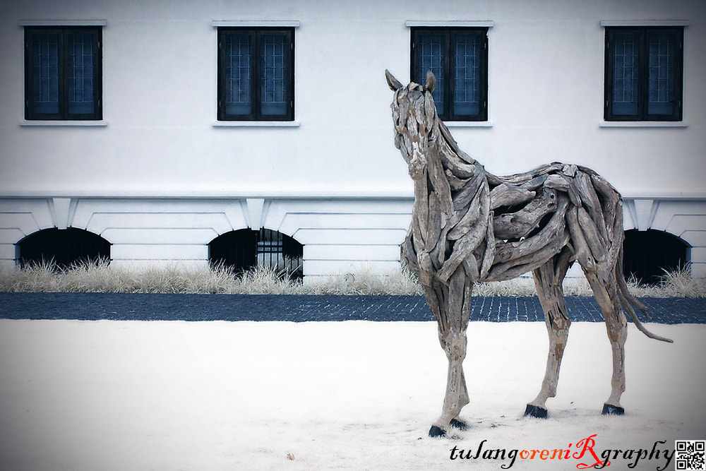 Photograph the wooden horse by tulangoren on 500px