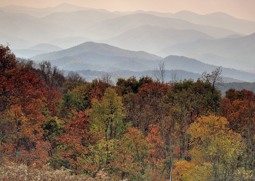 Photograph Forest vista by Damien Wogan on 500px