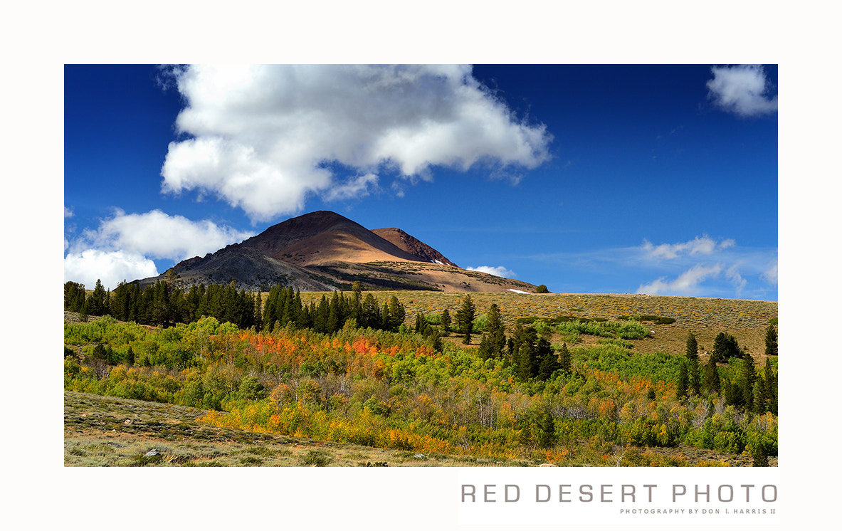 Photograph Sierra Nevada, Fall Color by Red Desert Photo on 500px