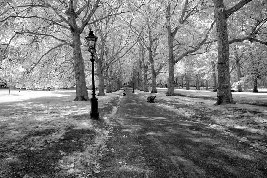 Green Park infrared