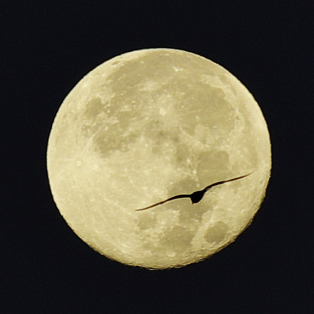 bird on the moon, Pentax K-5, Sigma APO 70-200mm F2.8 EX