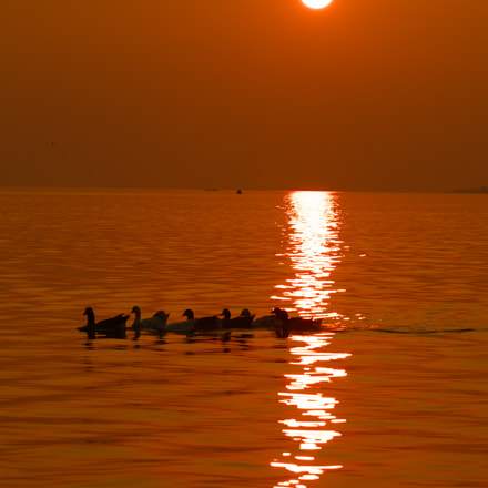 sunset and ducks, Pentax K-5