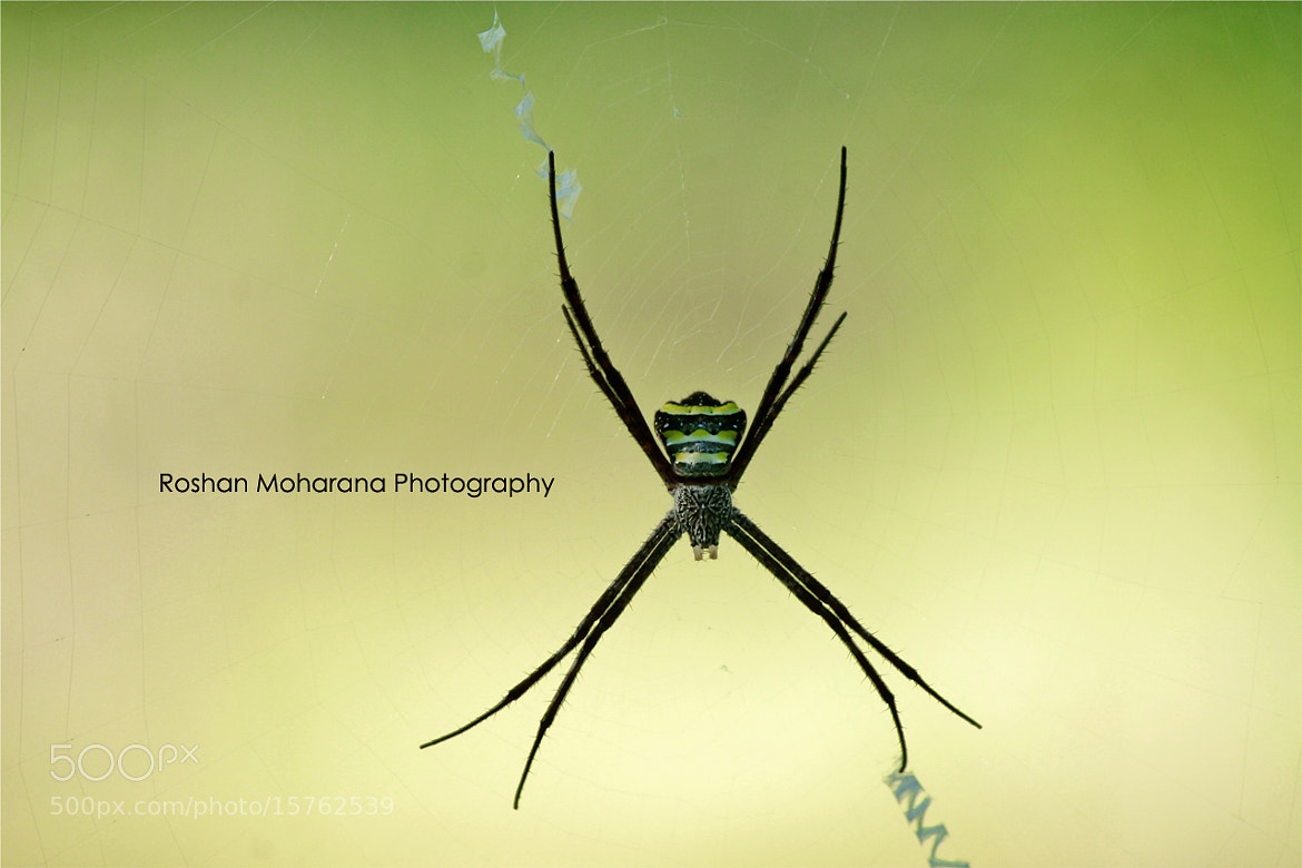 Photograph Signeture Spider by Roshan Moharana on 500px