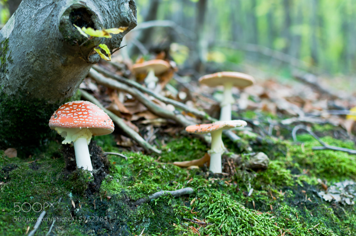 Photograph Amanita and friends by Mike Rogan on 500px