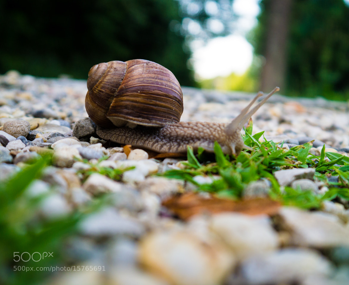 Photograph Kleine Schnecke by Daniel Wallace on 500px