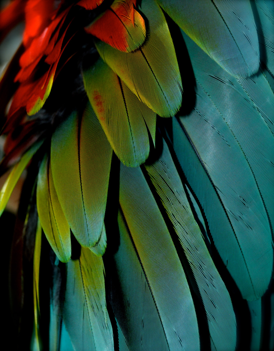 Photograph Cornell Feathers by Alexander Tietz on 500px