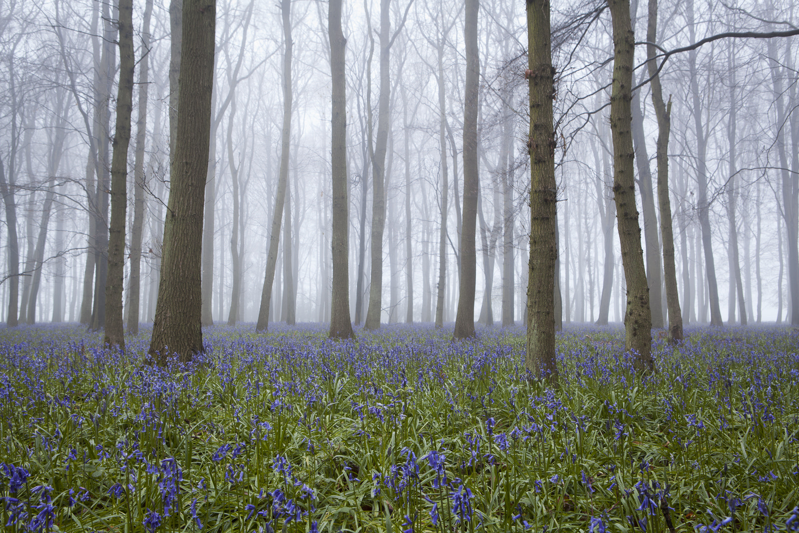 Photograph Bluebells ii by Terry Gibbins on 500px
