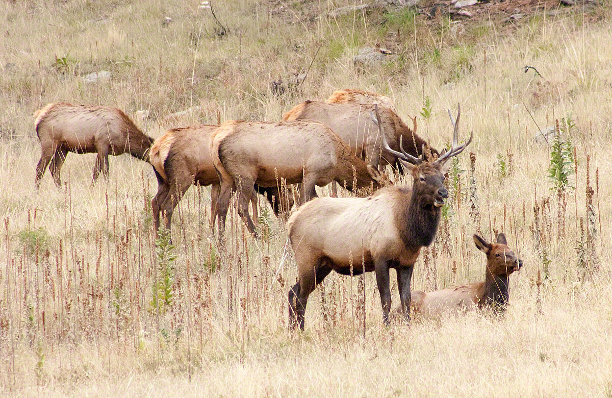 Photograph There are Elk by David Gerard Burkhardt on 500px