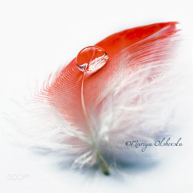 Photograph Splash of Scarlet by Mariya Olshevska on 500px