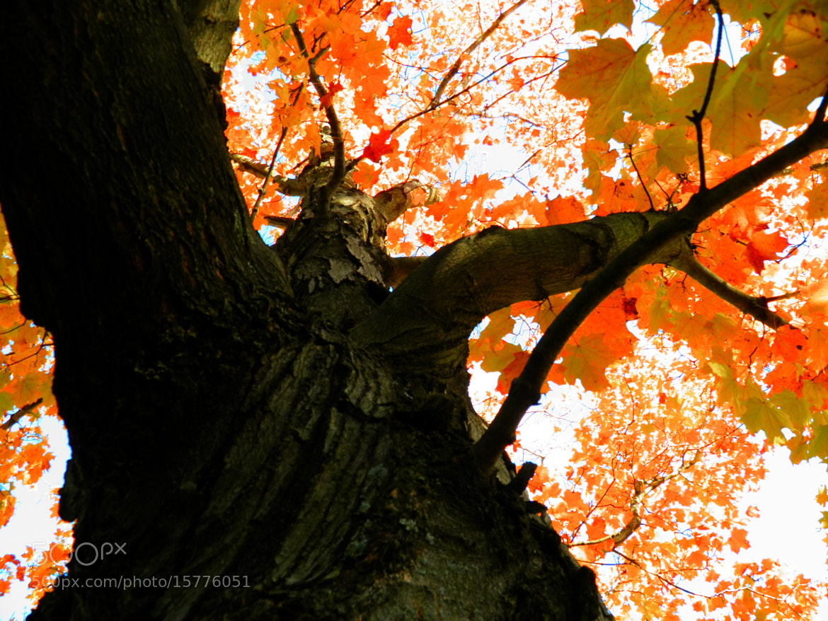 Photograph Beautiful tree in Autumn by Debbie Tagoe on 500px