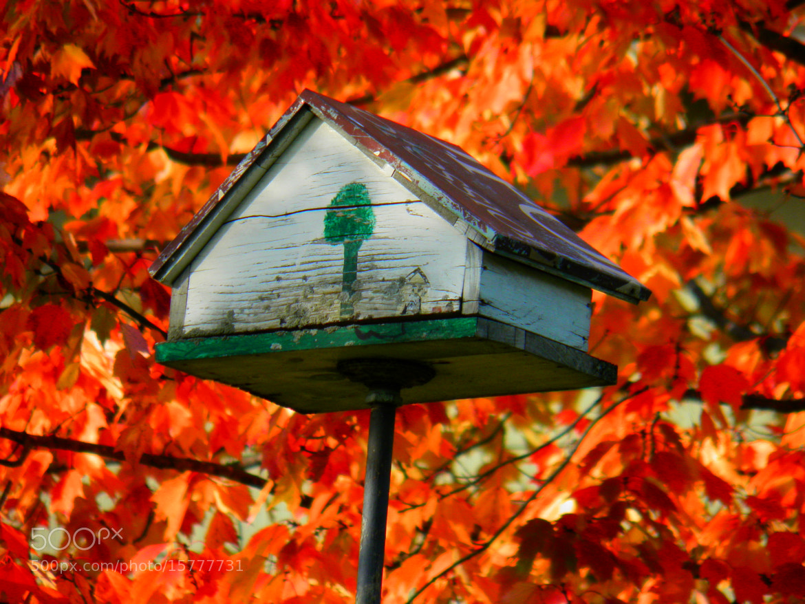 Photograph For The Birds by Debbie Tagoe on 500px