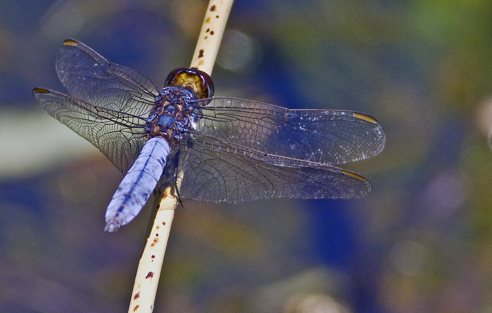 Photograph Dragonfly by Osiris Ra on 500px