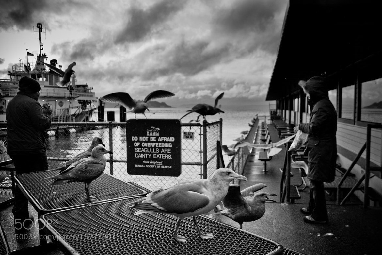 Photograph Seagulls by Suraj Balchand on 500px