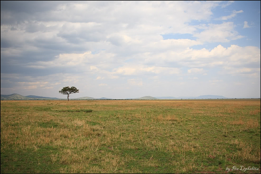 Serengeti landscapes №3