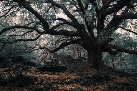 The Elder by Brian Wilson on 500px