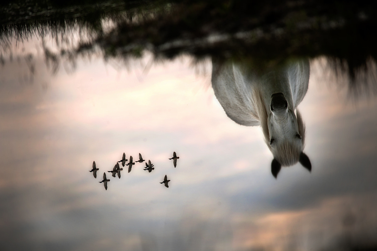 Photograph Fly by Milan Malovrh on 500px