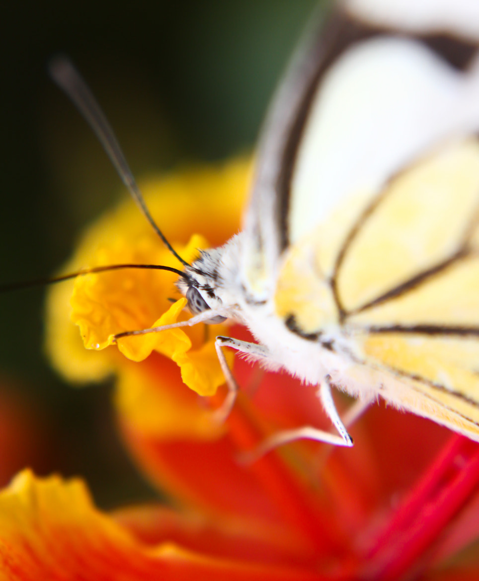 Photograph Up Close by Parth Jhala on 500px