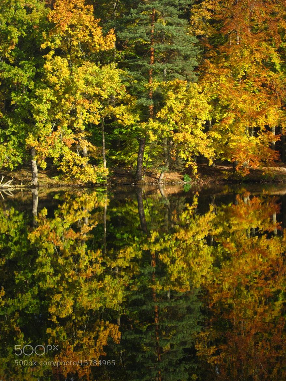 Photograph Autum reflection by Cornelia Braun on 500px