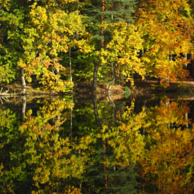 Autum reflection by Cornelia Braun (cbphotoworld)) on 500px.com