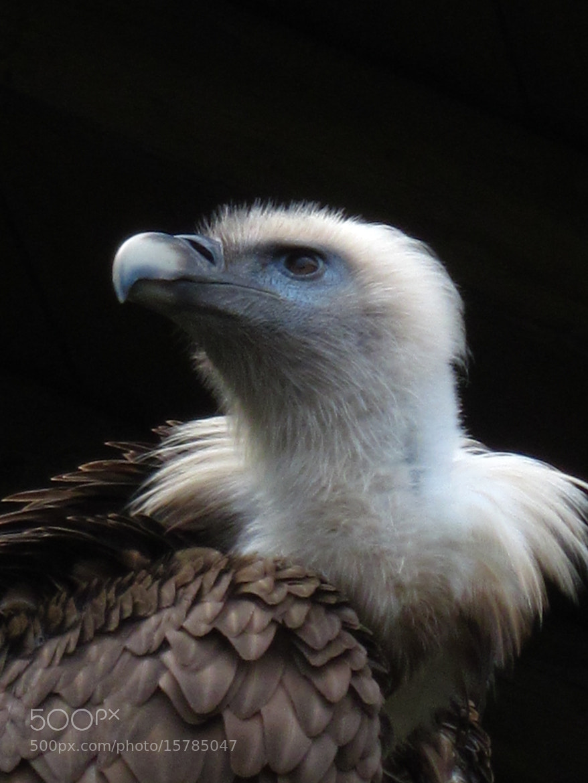 Photograph Vulture by Cornelia Braun on 500px