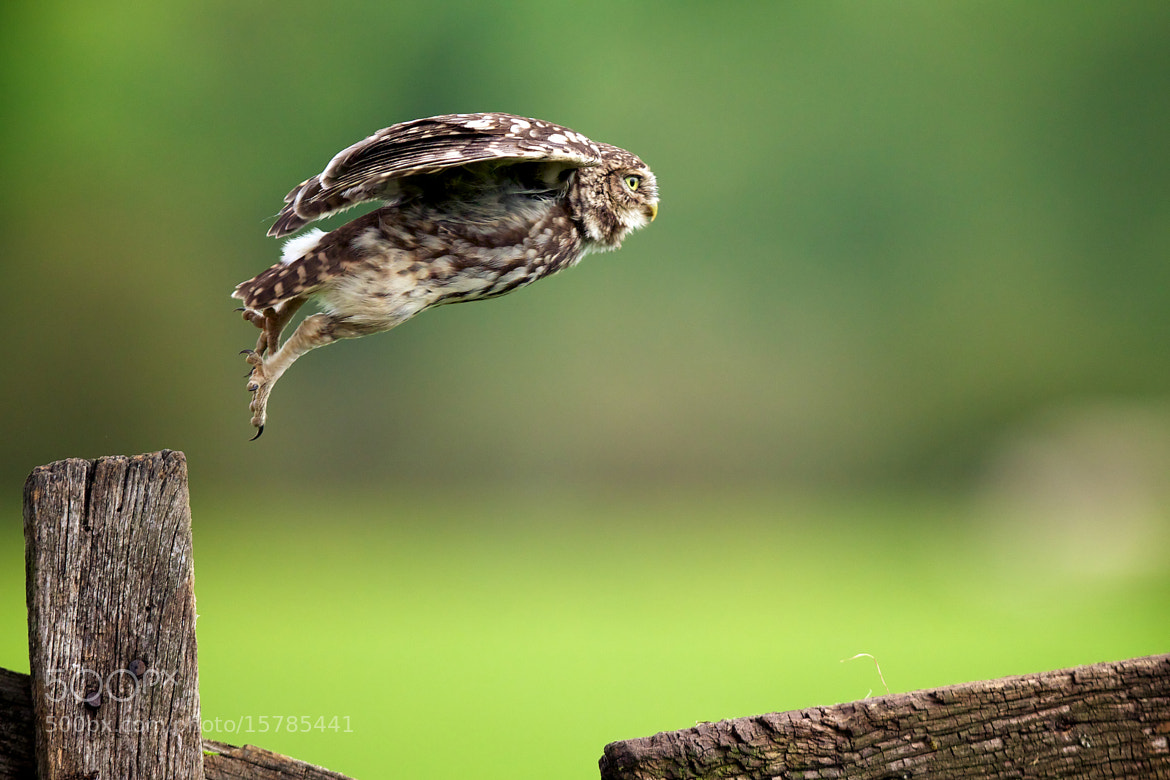 Photograph lift off.. by Mark Bridger on 500px