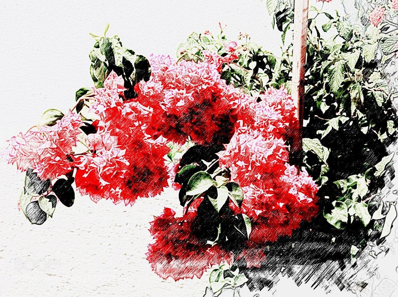 Photograph A sketch of flower by Atila Yumusakkaya on 500px