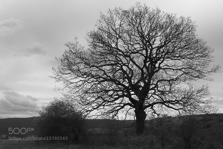 Photograph Tree by Martin Zeinelov on 500px