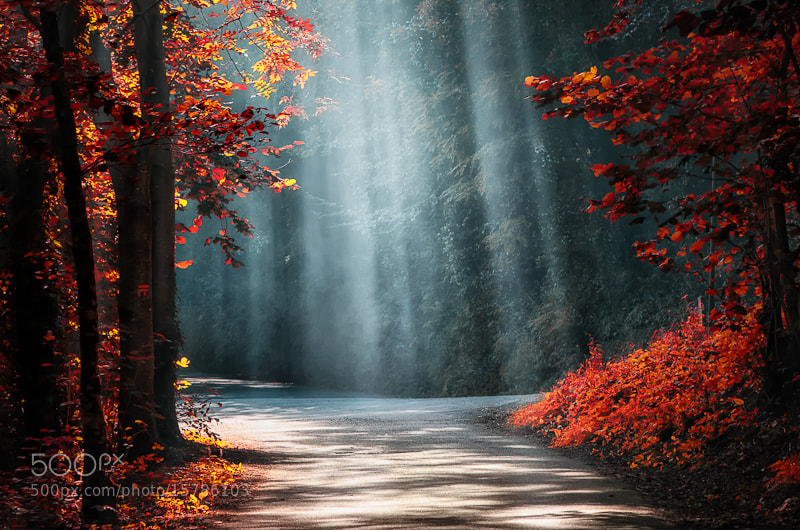 Sunrays through leaves -- outdoor photography