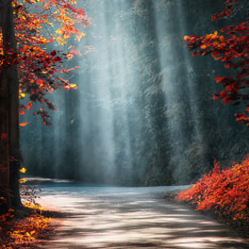 Lights in the Woods * by BLOAS Meven (capuchon29)) on 500px.com