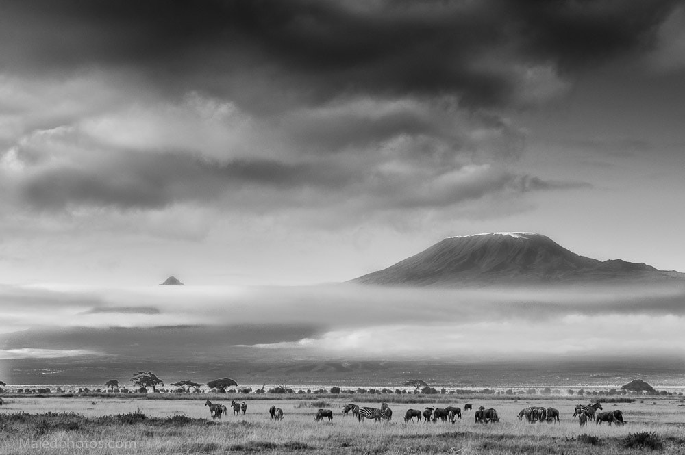 Photograph Jumbo by majed Sultan on 500px