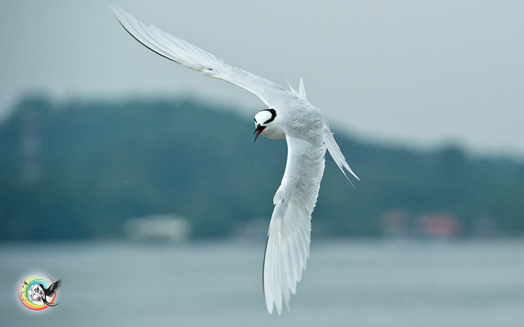Photograph Black-Naped Tern by Andy Fu on 500px