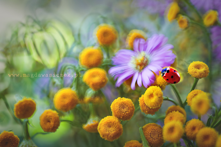 Photograph Garden of colors by Magda Wasiczek on 500px