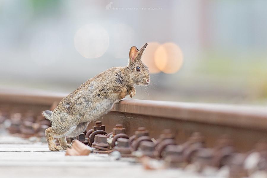 ~ Allez Hop! ~
