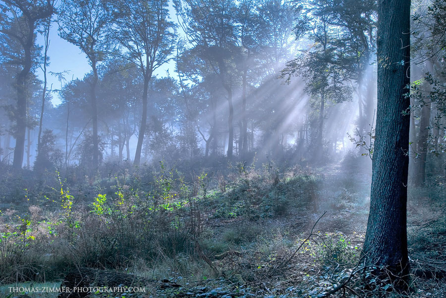 Photograph Morning Mist by Thomas Zimmer on 500px