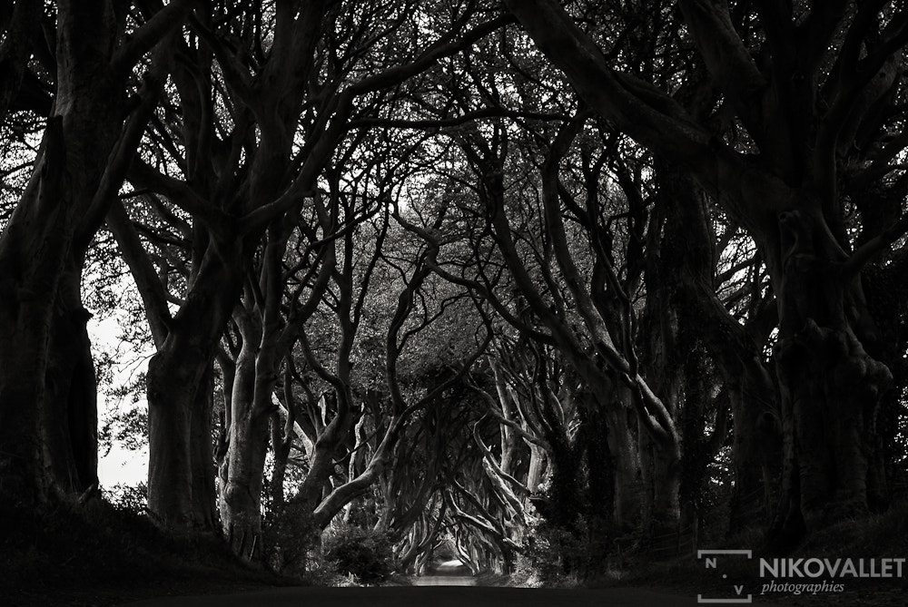 Photograph Ireland Trees by Niko VALLET on 500px