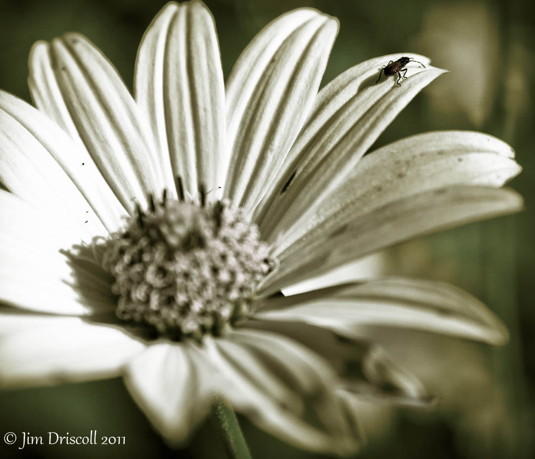 Photograph Walking the petal by Jim Driscoll on 500px