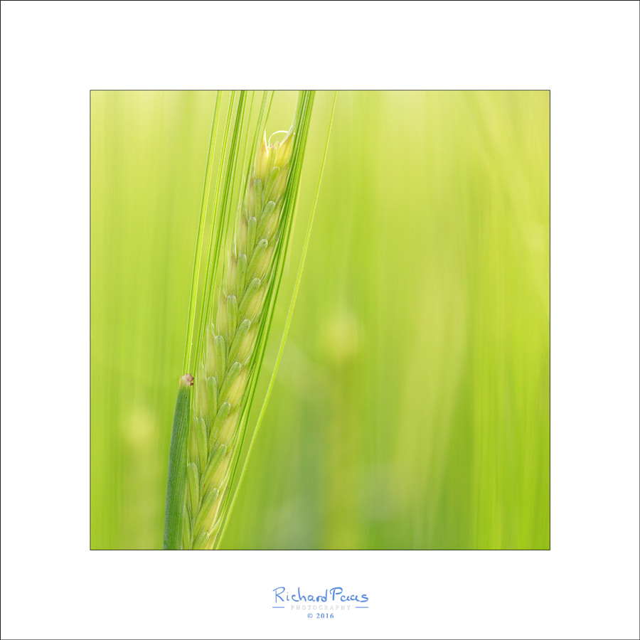 Grain (plain and simple) by Richard Paas on 500px.com