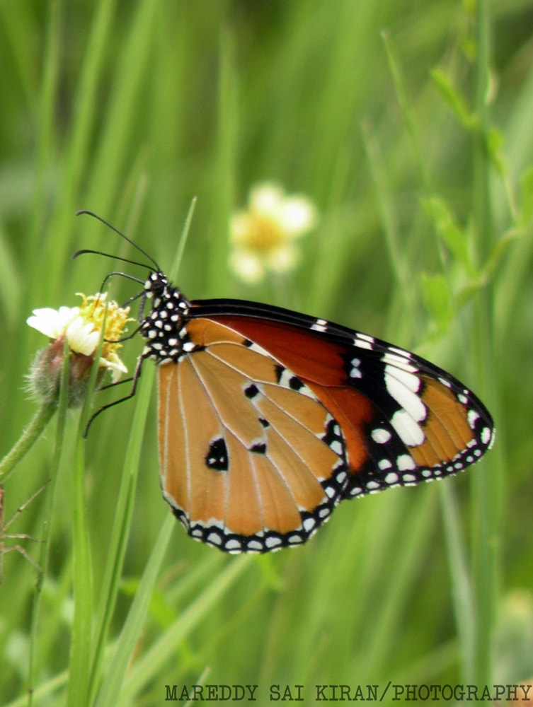 Photograph butterfly-2 by MSK  on 500px