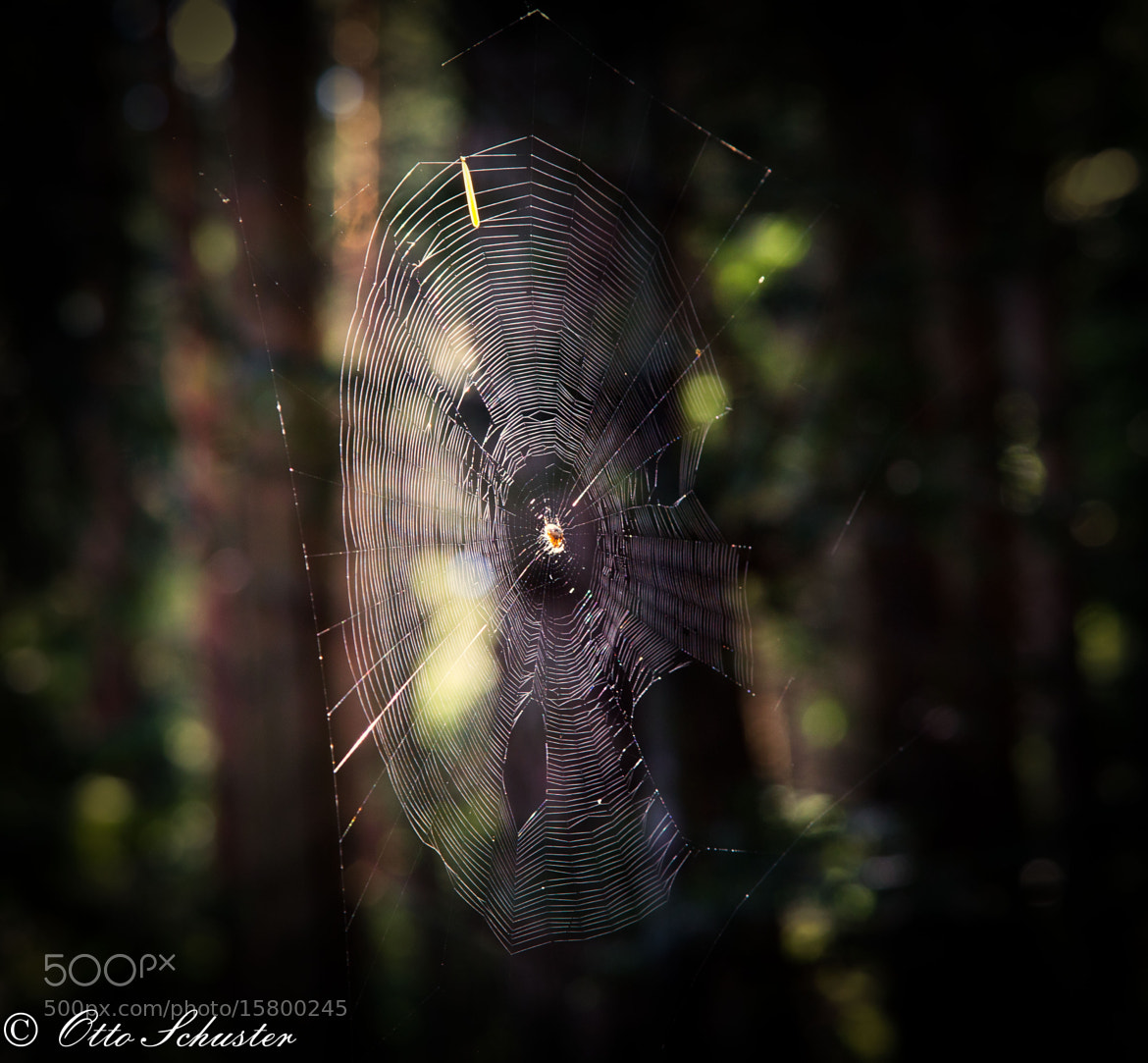 Photograph Spiderwebb by Otto Schuster on 500px