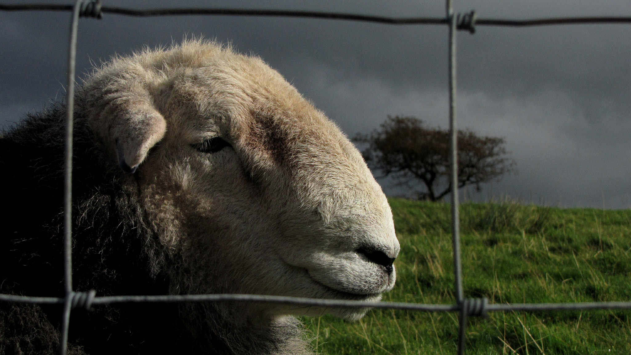 Photograph Herdwick by Charlie Ball Photography on 500px