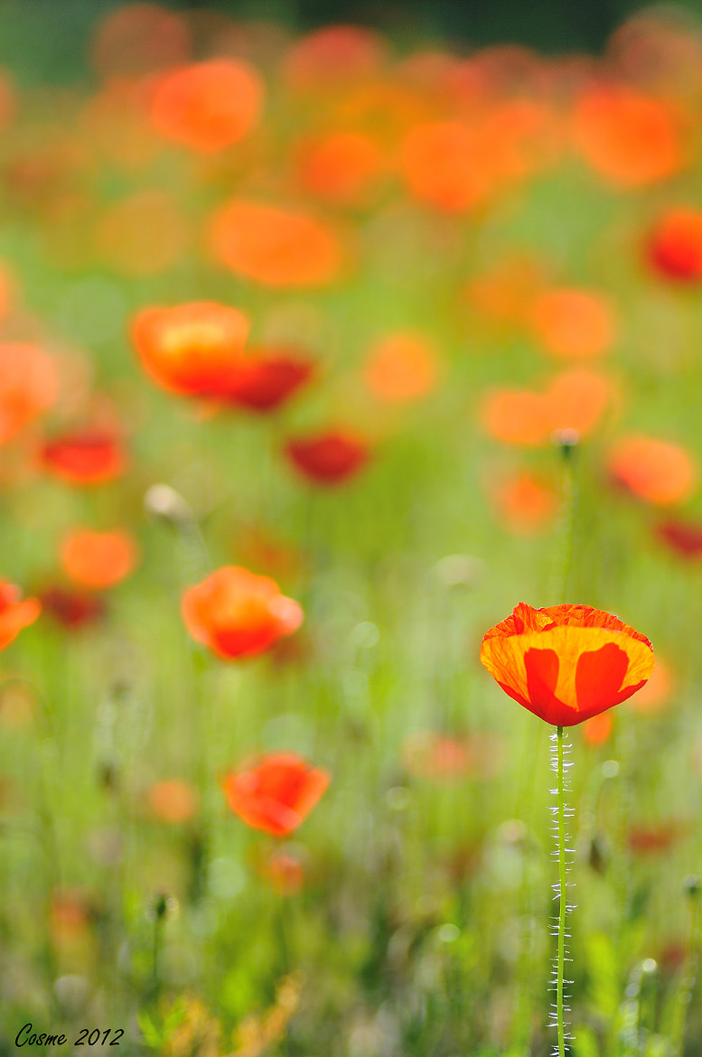 Photograph Red on green by Cosme Moncho on 500px