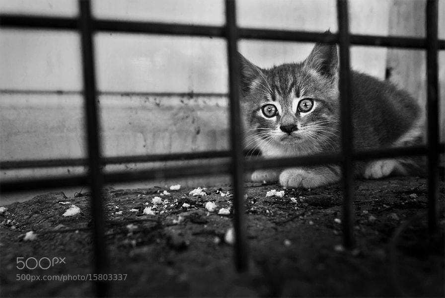 Photograph little by Timucin Toprak on 500px