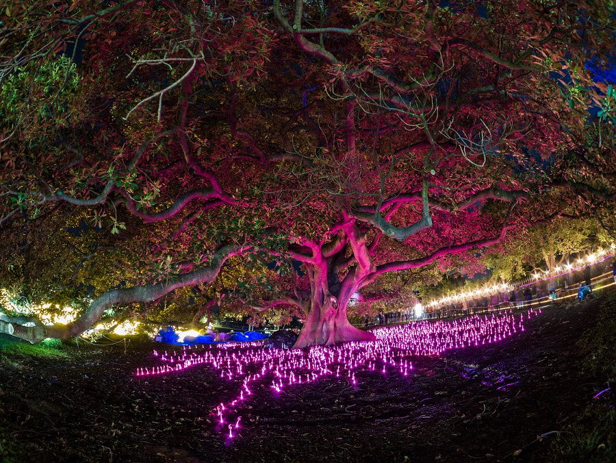 Vivid Sydney 2016 Royal Botanical Gardens by Travis Chau on 500px.com