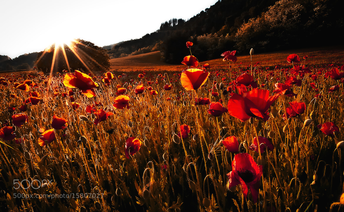 Photograph Red is my favourite colour by Matteo Muzzi on 500px
