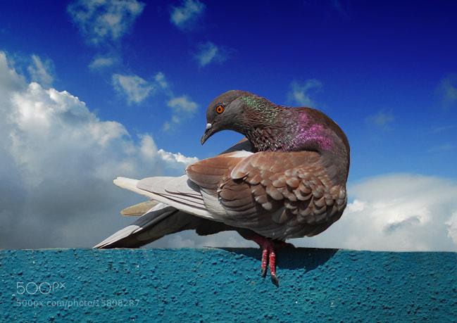 Photograph Bird by Shobin George on 500px