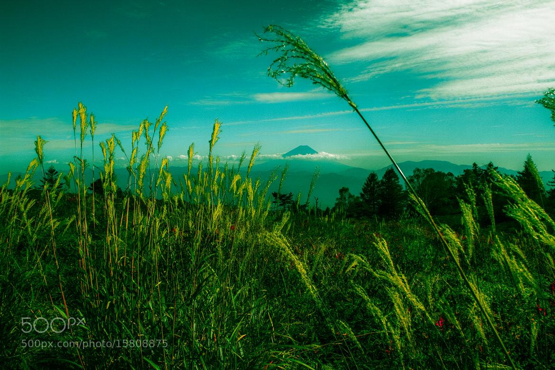 Photograph 甘利山_山梨県 by SANDEEP DHUNGANA on 500px